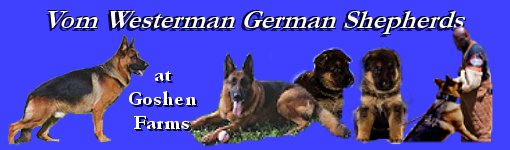 Vom Westerman Quality Purebred German Shepherd Puppies For Sale